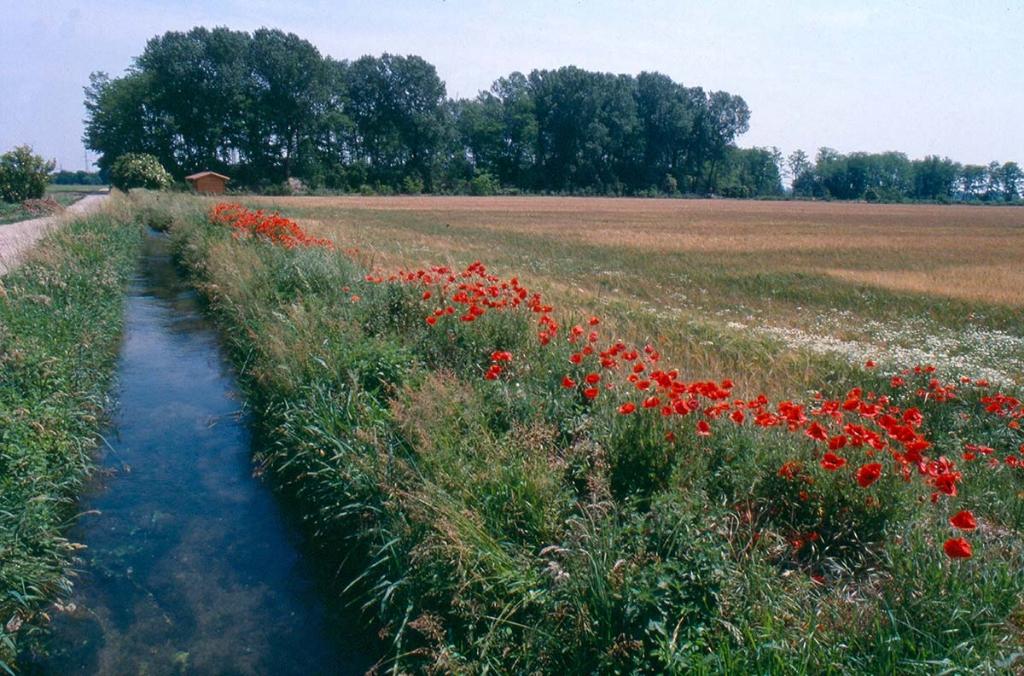 Parco Agricolo Sud Milano - 02